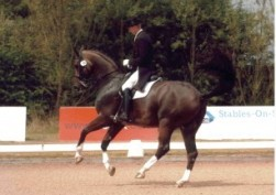 Ramazzotti - 17hh Bay Gelding By Welt Hit II